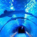 Aquarium de Paris : chaque premier mercredi du mois dédié au handicap