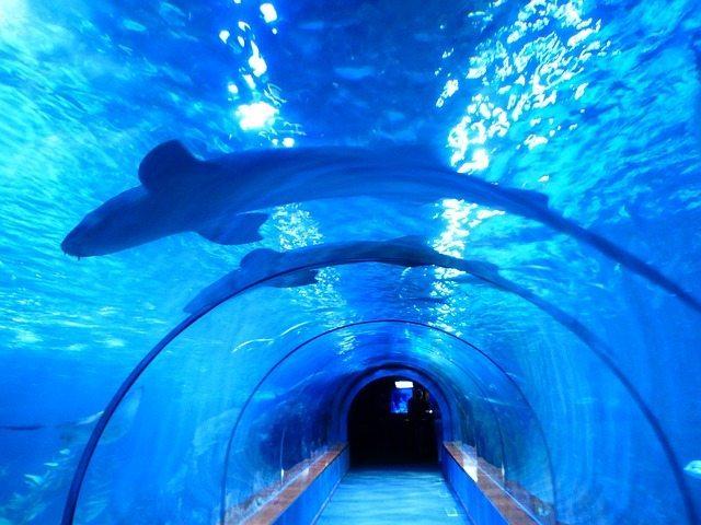 Aquarium de Paris chaque premier mercredi du mois dedie au handicap